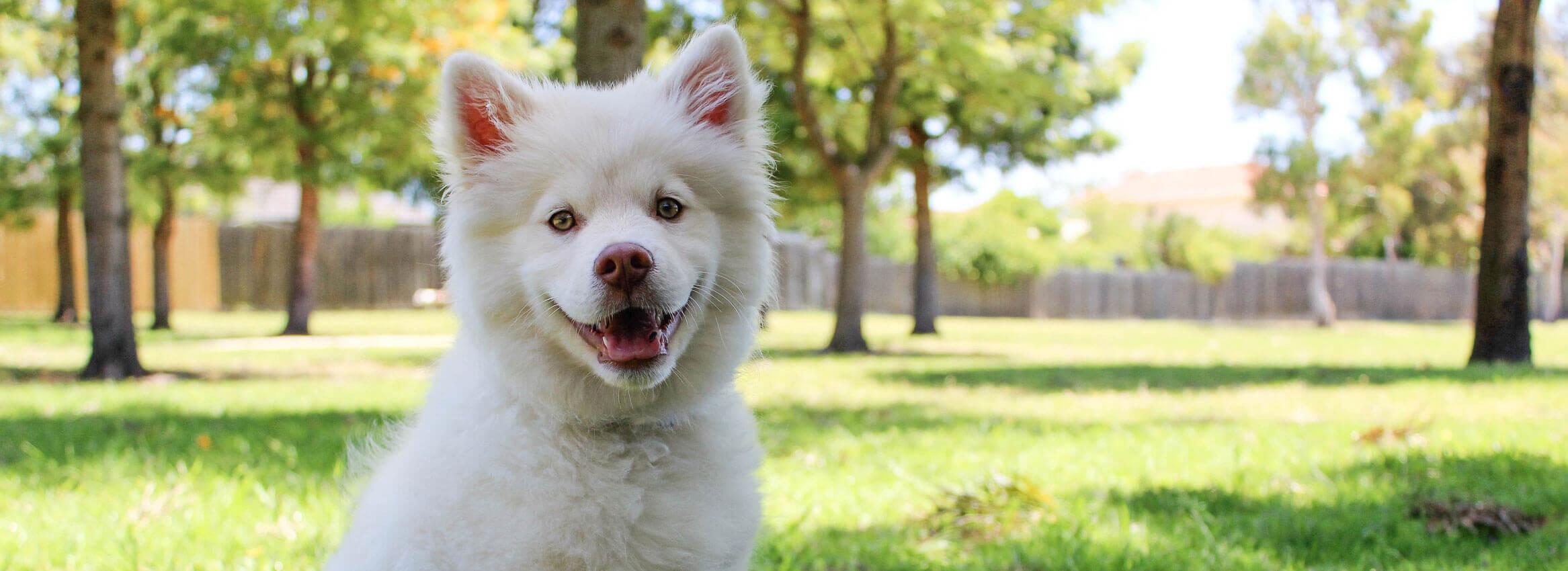 Bloomington Dog Care
